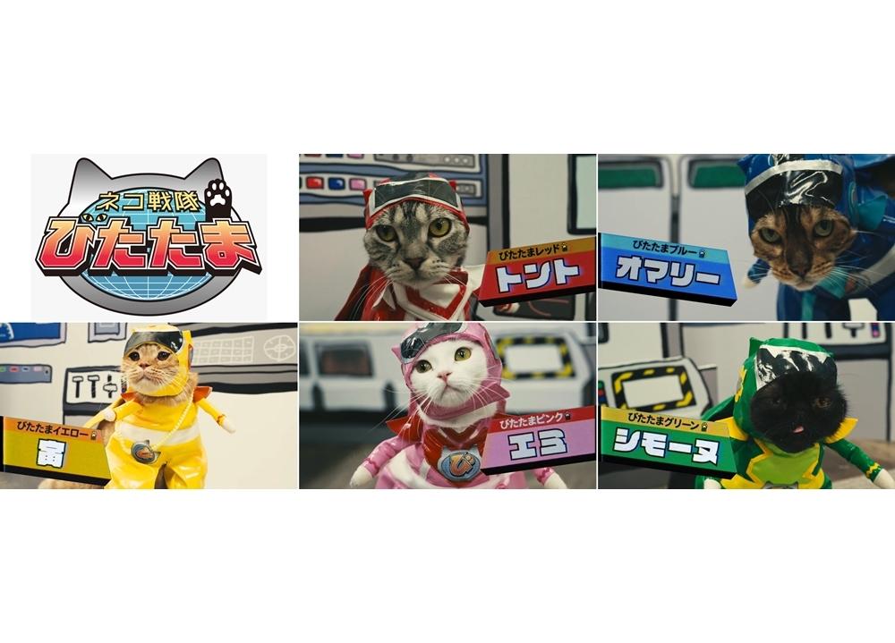 声優×猫『ネコ戦隊 びたたま』10/11より放送スタート