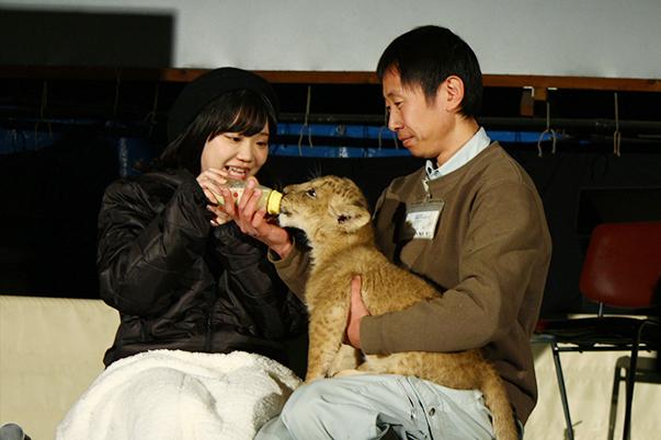 『群れなせ!シートン学園』声優・木野日菜さんが、ライオンの赤ちゃんに授乳体験! 「群馬サファリパーク」とのコラボイベント実施の画像-5