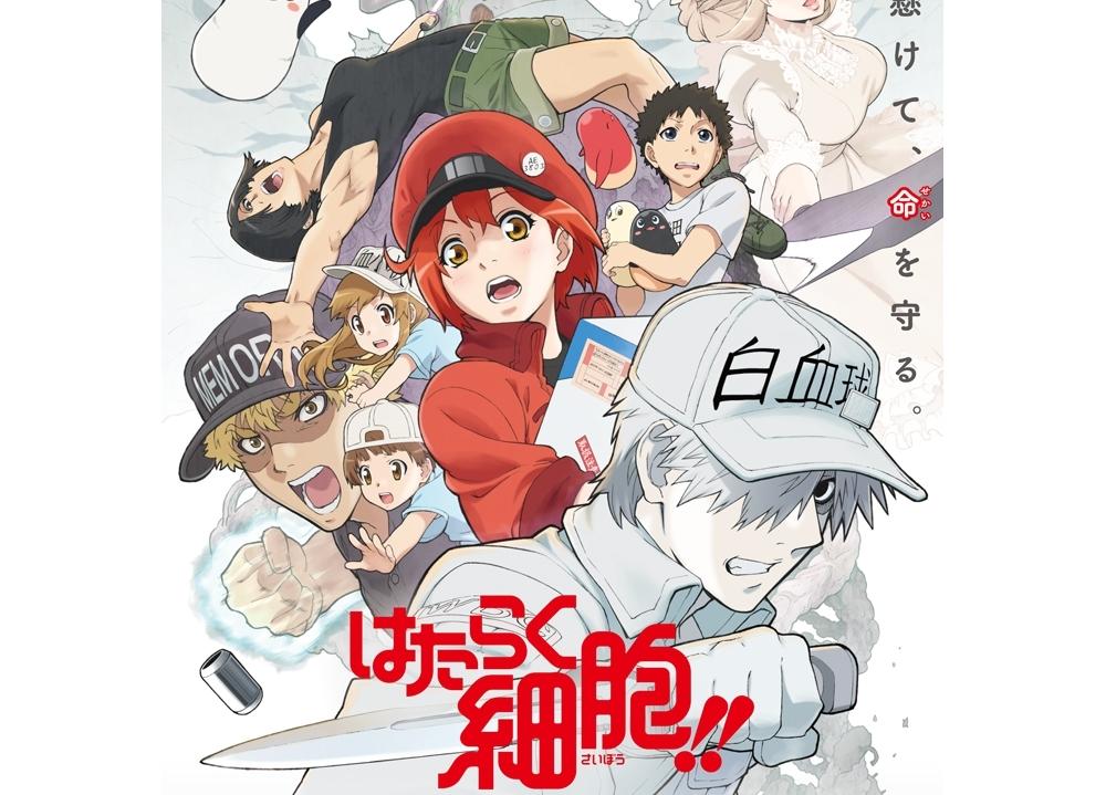 TVアニメ第2期『はたらく細胞!!』2021年1月放送決定!