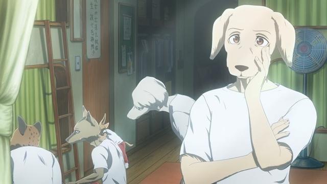 冬アニメ『BEASTARS』第2期:第17話より先行場面カット&あらすじ到着! ゴウヒンに弟子入りしたレゴシが学園に帰ってくるの画像-2