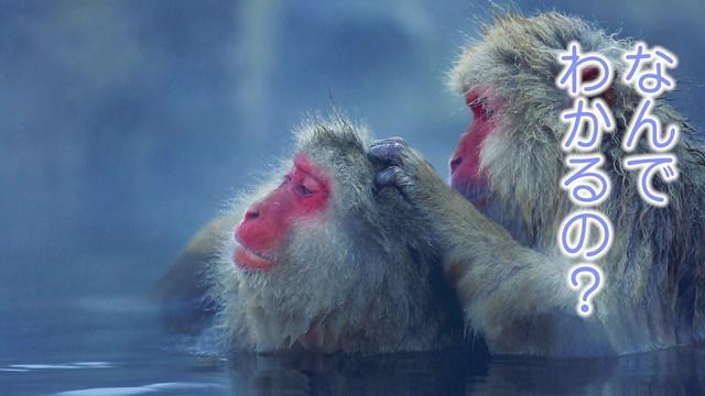 人気声優・平野文さんと藤原啓治さんが可愛い動物夫婦にアテレコする、ニヤニヤ不可避の動画が公開! アプリ『ふたりの』リリースと同時に発表